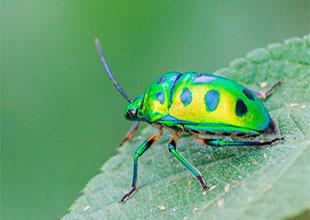 Jwel bug Click by Hiten Rajgor