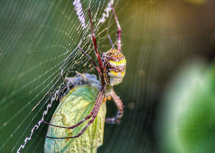 spider Click by Hiten Rajgor